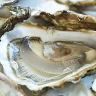 Denmark's Oyster Festival
